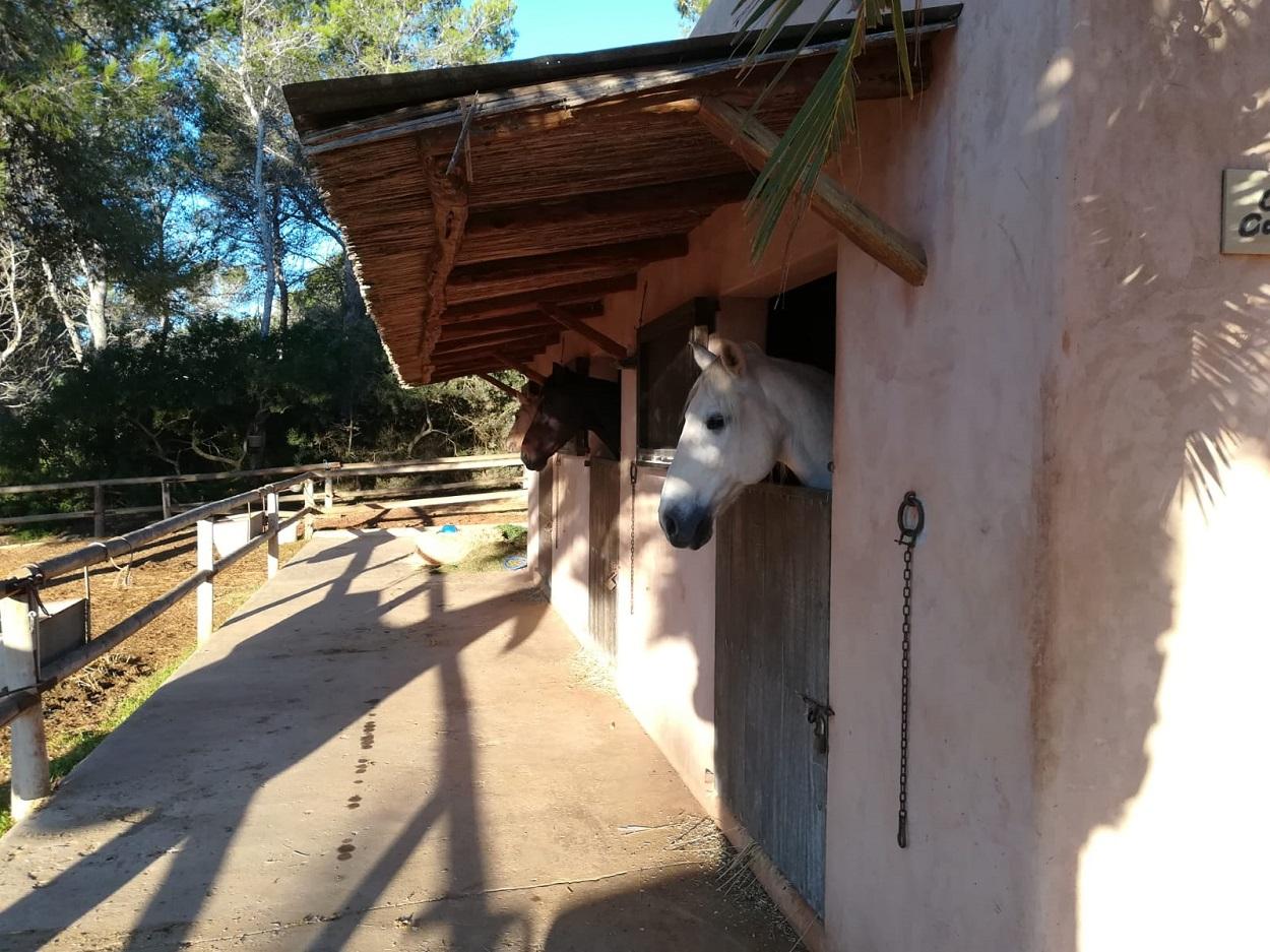HETibiza Horse riding Ibiza